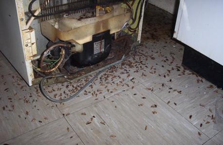 Κατσαρίδες πουθ βρέθηκαν πίσω από ένα ψυγείο από την Απολυμάνσεις Άγιος Δημήτριος