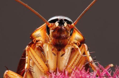 Απολύμανση κατσαρίδα